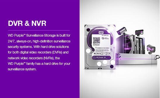 wd-purple-03